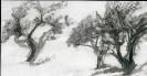 JARDIN CALLIGRAPHIE_2_15