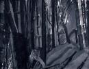 Bambous de GENEVIEVE GOSSOT3_1