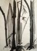 Bambous de GENEVIEVE GOSSOT4_10