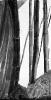 Bambous de GENEVIEVE GOSSOT4_8