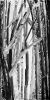 Bambous de GENEVIEVE GOSSOT4_9
