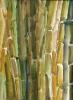 Bambous de GENEVIEVE GOSSOT_26
